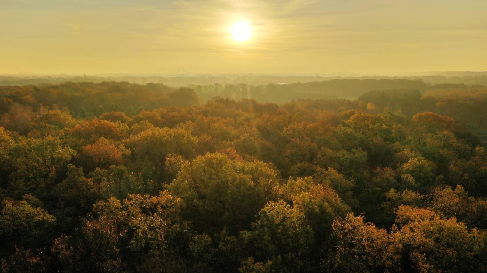 Tag des Waldes